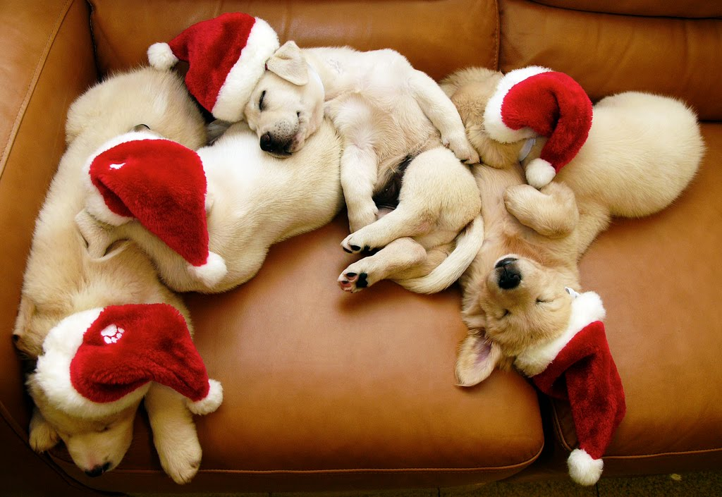 cute-christmas-puppies11