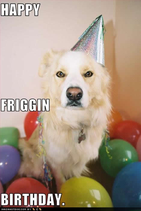 funny-dog-pictures-friggin-birthday.jpg