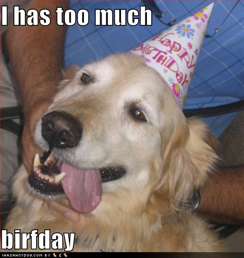 funny_dog_pictures_too_much_birthday