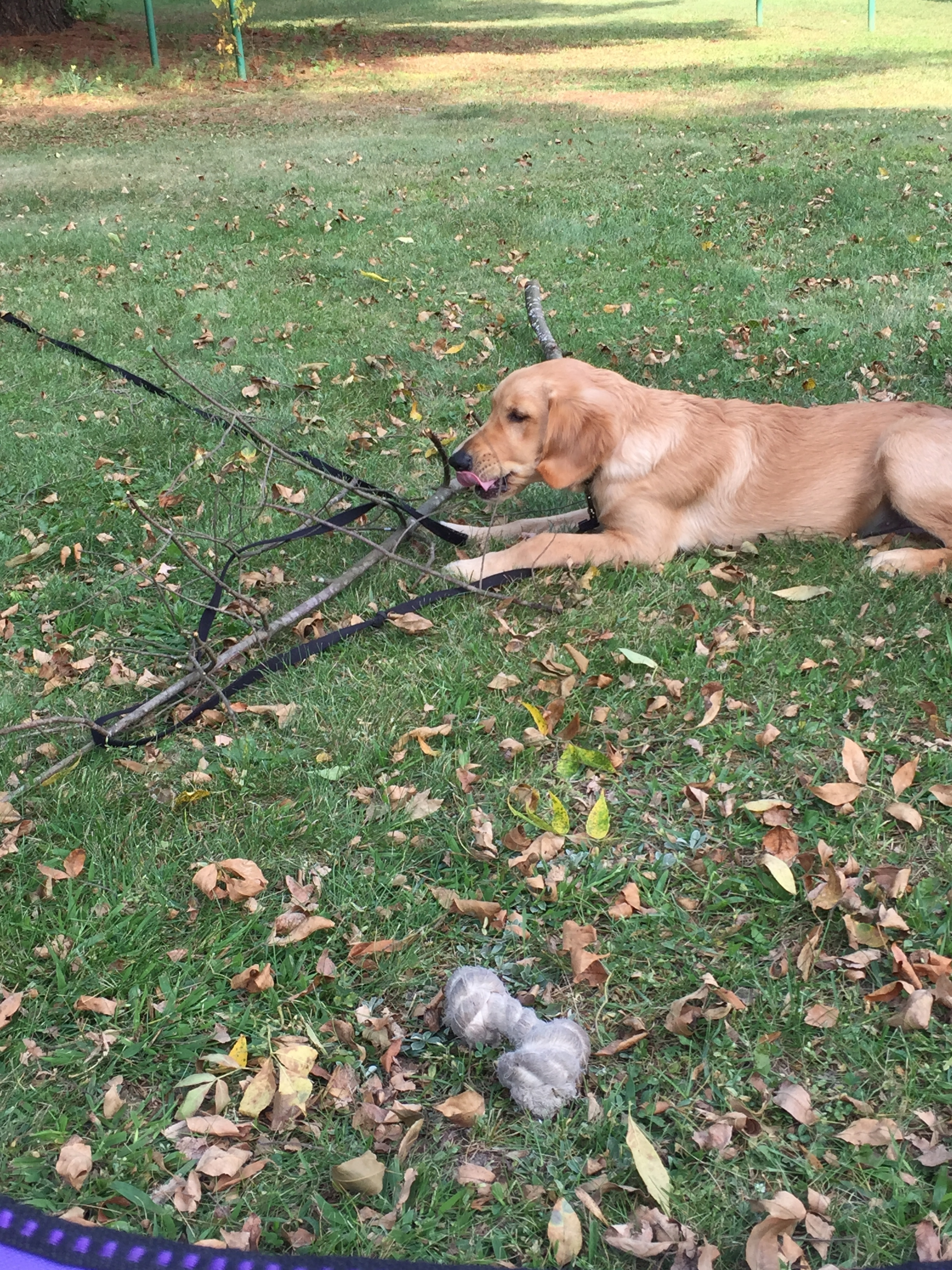 Weekend Recap: Puppy Time in Wisconsin